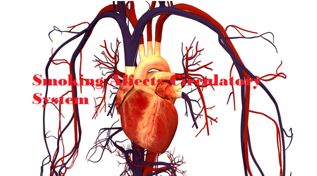 How Smoking Affects Your Circulatory System